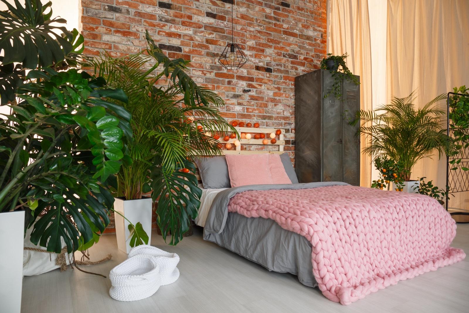 Pflanzen im Schlafzimmer: Fluch oder Segen?